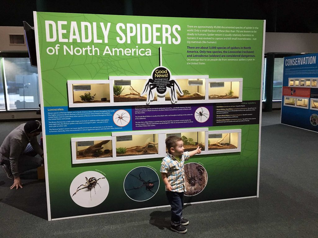 bernard-spiders-va-living-museum-5784-2