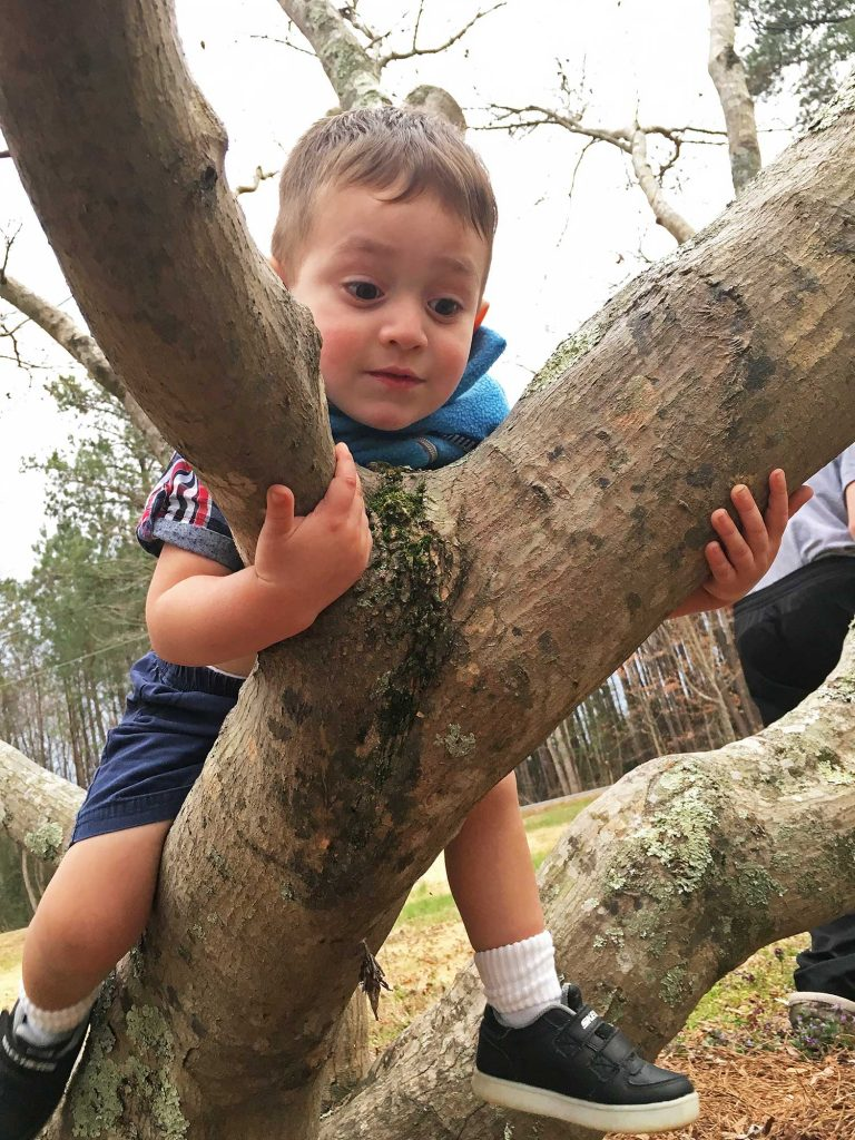 Bernard trying to climb a tree in Catherine's front yard in Mattaponi, Virginia March 28, 2018, -5483-2